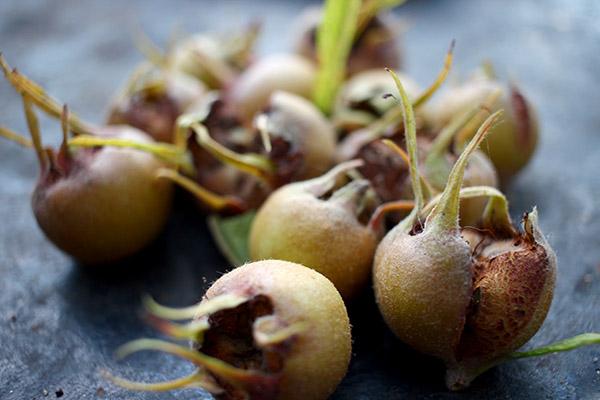 Att korsa rönn och mispel kan vara en god idé för att få en del av den mindre härdiga mispelns speciella smak i en buske som blir lika härdig som rönn.