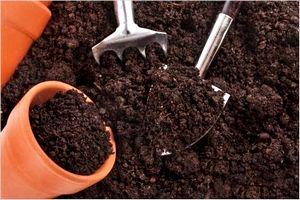 鉢植えの時期