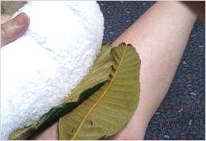 びわの葉湿布