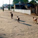 Chevres Belo