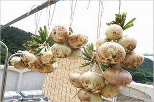 玉ねぎ 保存方法
