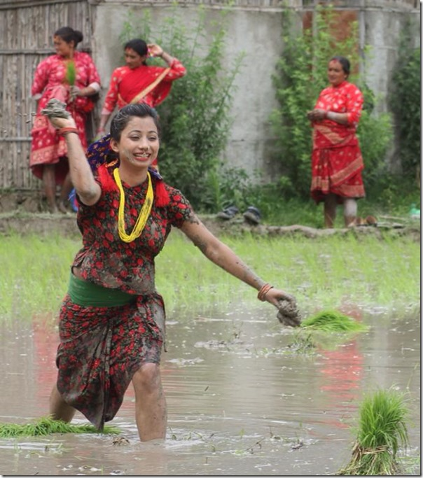Beauty in paddy field, Nepali actress photo shots in Asar 15
