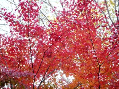 天城山の紅葉