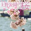 sakura_uenopark_eyecatch