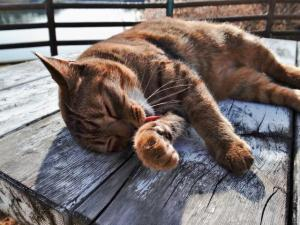 一人暮らしおすすめペットはどんな動物でしょうか?