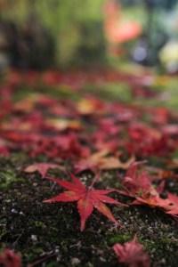 atumun_leaves_okutama_003