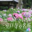 mimurotoji_hydrangea_eyecatch