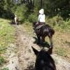 乗馬を楽しみました。人馬一体とは。 #791