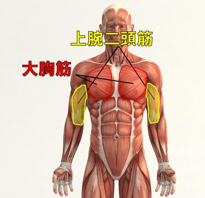 懸垂で背筋を鍛えられる部位