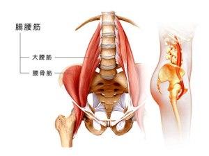 腸腰筋の図解