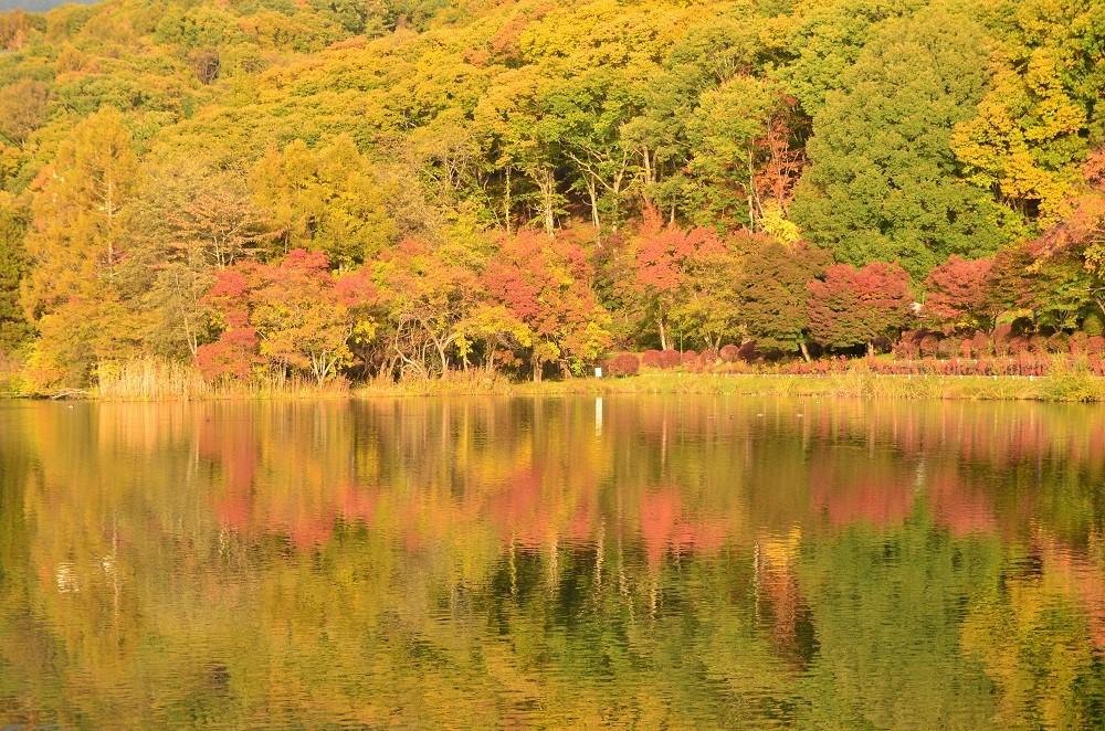 蓼科湖の紅葉始まる