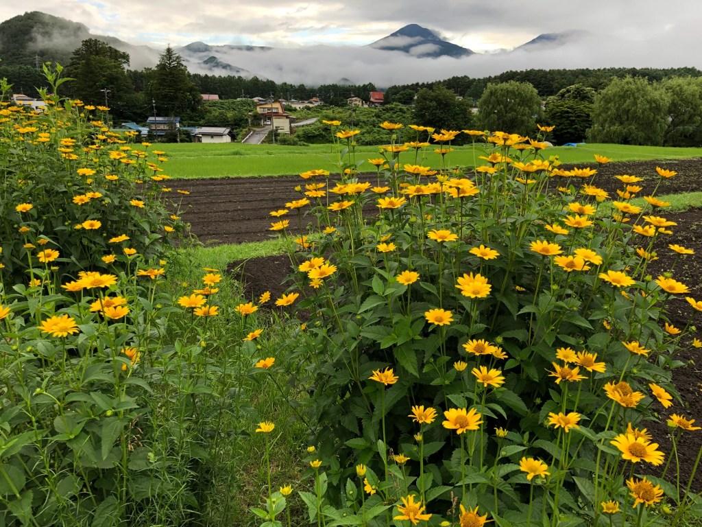 0716蓼科山と花と梅雨と