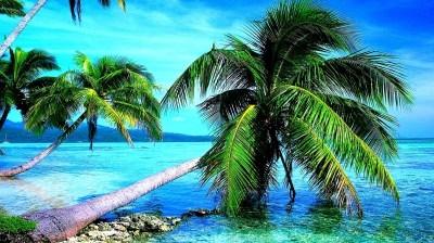 4K Palm Trees Wallpapers High Quality | Download Free