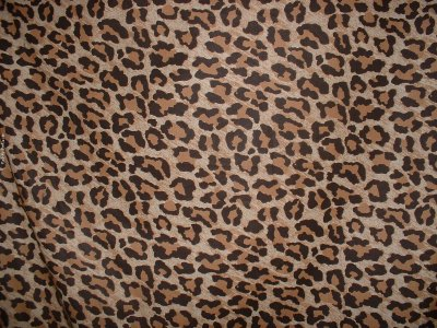 Leopard Print Wallpapers High Quality | Download Free