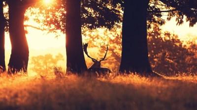4K Deer Wallpapers High Quality | Download Free