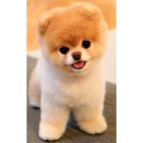 Medium Crop Of Dog That Looks Like A Bear