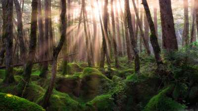 4K Forest Wallpapers High Quality | Download Free
