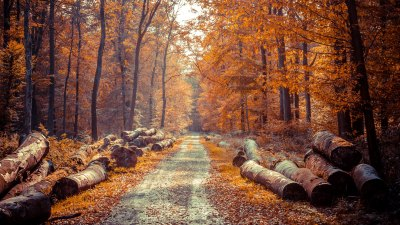 4K Autumn Wallpapers High Quality | Download Free