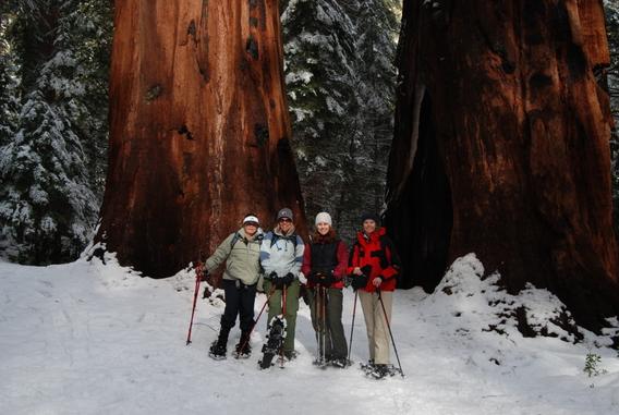 Snowshoe_Merced_Grove_Yosemite_DeGrazio