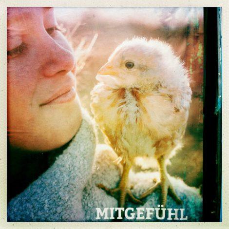 Was bedeuten die Zahlen auf den Eiern? Sorgt für gesunde und glückliche Hühner!