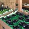 鎌倉野菜の直売所「かん太村」の新鮮野菜と名物カレー