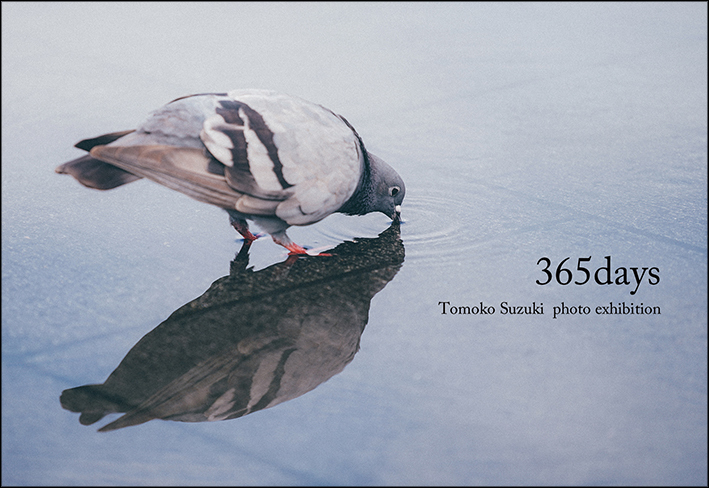 365days Tomoko Suzuki photo exhibition