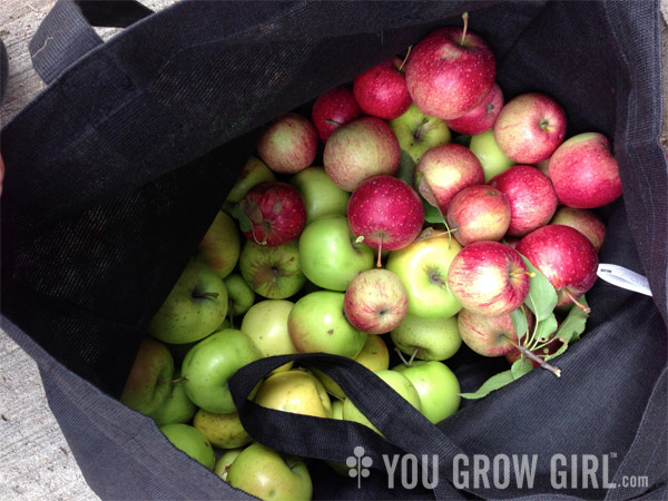Bag of Foraged Apples