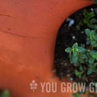 Growing an Edible Strawberry Pot