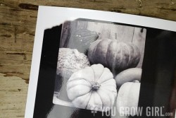 Pumpkins Polaroid