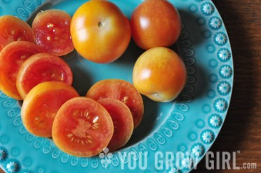 tomato giallo a grappoli by Gayla Trail: All Rights Reserved