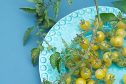 White Currant Tomato by Gayla Trail: All Rights Reserved