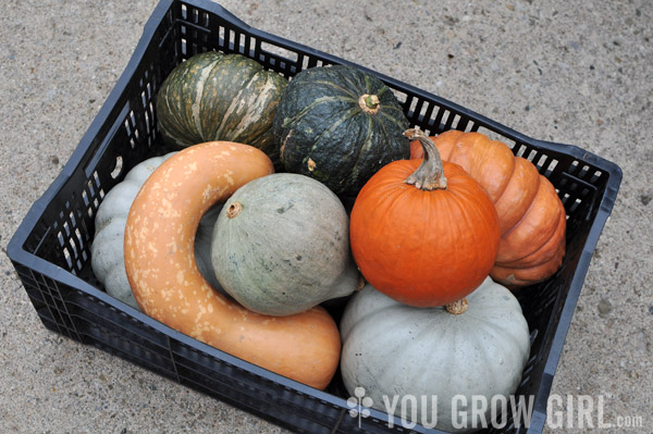 Winter Squash and Pumpkins