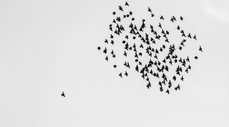 birds-1714542_960_720