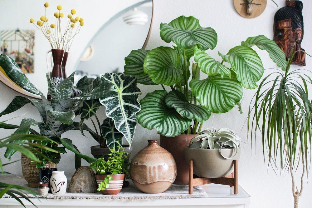 Grote Plant Woonkamer : Bloemen en planten als accessoires woonkamer top grote
