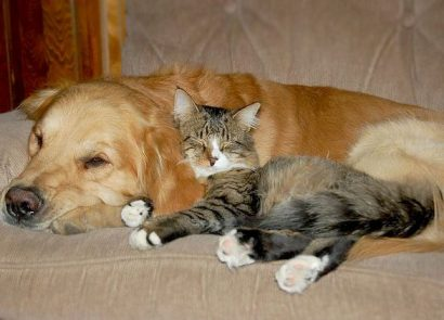 Introduction about cats and dogs...?
