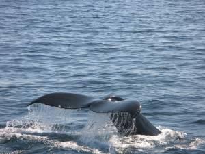 Swim with the Dolphins in Xelha