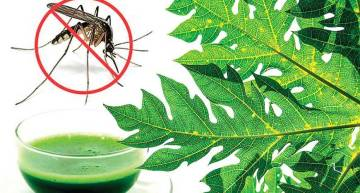 Surviving  Dengue Intelligently