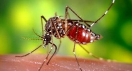 Can We Eliminate Mosquitoes for Good?
