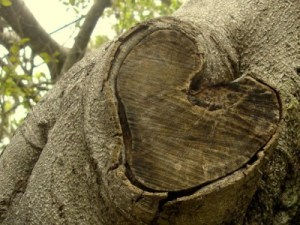 Love Trace Love Mark on Tree Stem