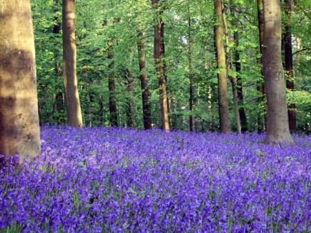 Bluebells In The Woods Short Story for Children