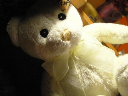 White-Taddy-bear