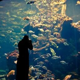 Update 1: Het politieke aquarium