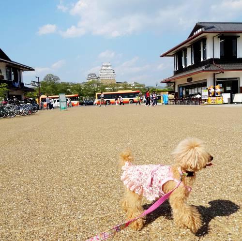 姫路城と杏