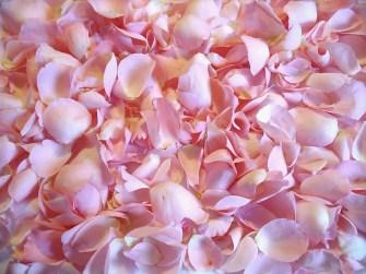 flower-671933_640