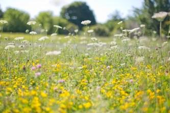 wildflowers-554122_640