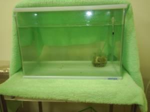ユムシのの水槽 2