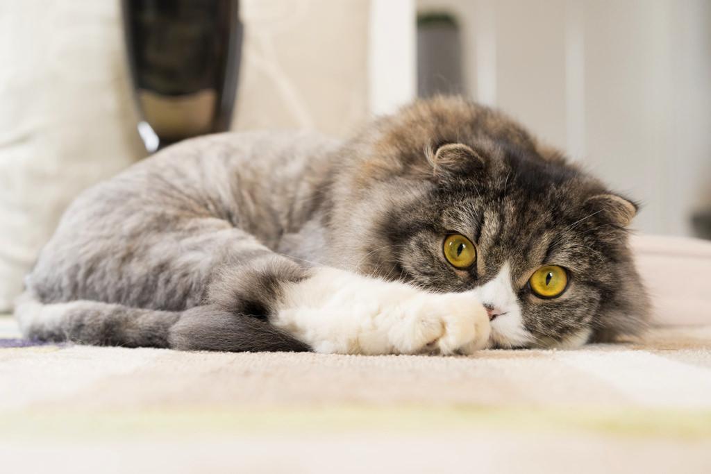 ハイライトをかける前の猫のイメージ