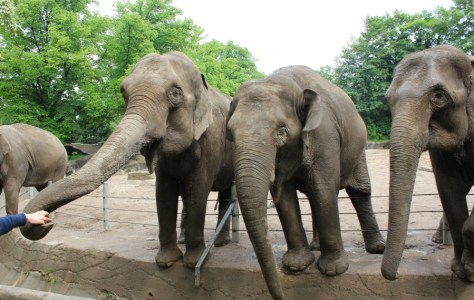 Elephants at the Tierpark Hagenbeck Zoo in Hamburg, Germany via ZaagiTravel.com