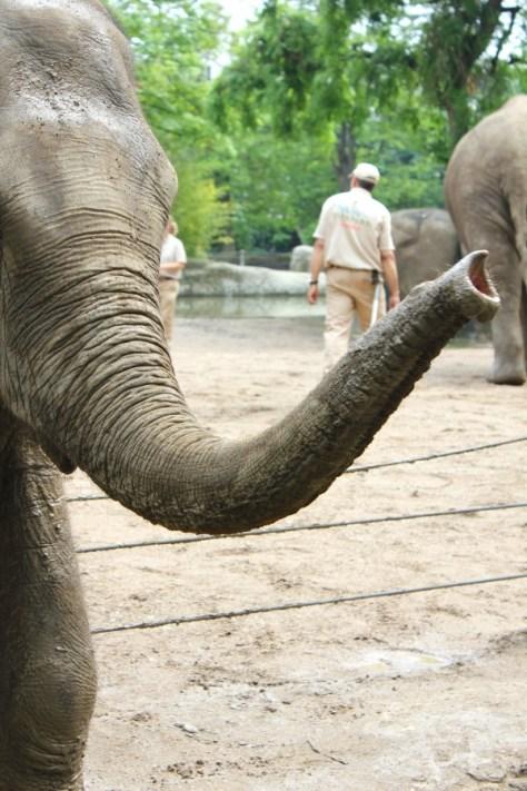 Elephant at the Tierpark Hagenbeck Zoo in Hamburg, Germany via ZaagiTravel.com