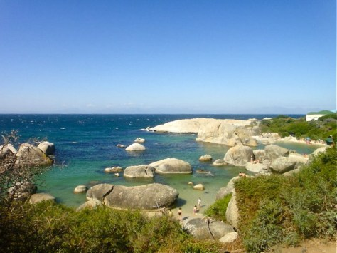Penguins at Boulders Beach in Simon's Town, South Africa via ZaagiTravel.com